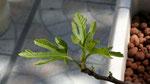 Des feuilles bien formées