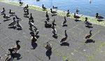 En désordre à Reykjavik