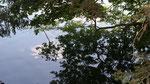 Au lac de Servières