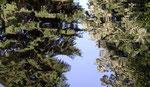 Pièce d'eau Jardin de Voiron
