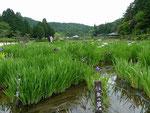 永沢寺前にある「花 しょうぶ園」。永沢寺は、関西花の寺25箇所霊場の第11番