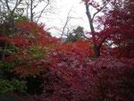 龍野公園の紅葉