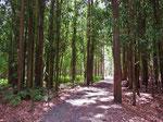 Eukaliptuswälder vor Santiago.