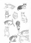 Sase's Cats 2