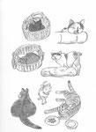 Sase's Cats 1  2016