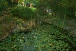 Mein grosser Teich