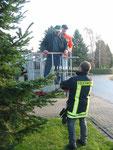 Der Baum wird geschmückt (21.11.2009)