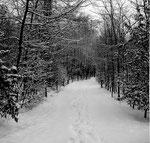 Die Lange Erlen im sehr kalten und langen Winter 1962/1963 (wochenlang bis 20 Grad unter Null)