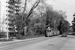 Ein Tramzug der Linie 22 mit zwei Anhängewagen in der St.Alban-Anlage (Die Linie 22 hatte ihren Endpunkt beim Schänzli) 1969