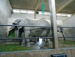 Innenansicht des Elefantenhauses im Zoologischen Garten Basel, 2014