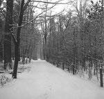 Ein Waldwegen den Langen Erlen gegen Riehen, 1962/1963