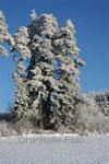 Verschneite Bäume am Buchwald