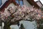 Geschmückter Osterbaum am Gabelweg