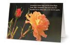 10) Glückwunschkarte (Klappkarte - 182x117 cm) 1,70 €