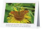 22) Glückwunschkarte (Klappkarte - 139x107cm) 1,50 €
