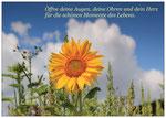 69) Postkarte A6 - 1,00  €