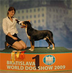 Korolevstvo Gornih Psov Well - ex 1, CAC, R.CACIB, R. WORLD WINNER (World dog show '09)