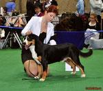"""Florisel vom Achholzli (Флоризель) """"Золотой ошейник-2010"""" Лучший кобель, Чемпион породы, Лучший представитель породы, Лучшая собака!"""