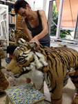 """Tigre Tigre"" , 2017, Pierric Tenthorey, Théâtre du Jorat"