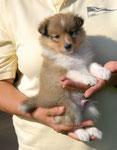 Albert - 5 Wochen alt