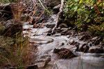 Torrente nel bosco della Laga (TE)