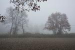 Viaggio nella nebbia - Umbria