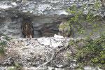Hibou grand duc et 3 petits