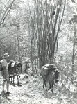 Teilhard on the Shan plateau,  Burma 1938