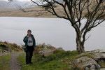 """Irland Birding 2004 """"Natur und romantische Guesthouses"""""""