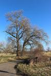 Imposante Bäume gab's zu sehen