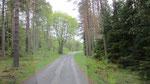 Der Weg auf dem wir die Elche trafen :-)