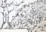 "Bleistift auf Papier (60x42cm)  ""Feldberg I"" 1993"