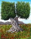 Vecchio ulivo fra papaveri - Olio su tela ( materico ) - 80 x 100 cm - 2009 - (Collezione privata )