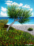 Il pino e il mare - Olio su tela - 30 x 40 cm - 2007 ( collezione privata )