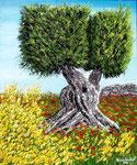 Ulivo fra ginestre e papaveri - Olio su tela ( materico ) - 50 x 60 cm - 2010  (opera disponibile)
