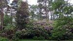 Dienstag: Naturpark der Benediktiner Abtei Kylemore Abbey.