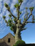 Dienstag: Hängende Gärten von Marqueyssac im Dordogne Tal (2 von 2)