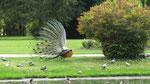 Samstag: Pau, Spaziergang durch den Jardin de Massey (2 von 2)