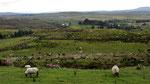 Dienstag: Blick vom Hilltop Aussichtspunkt auf die Moorlandschaft.