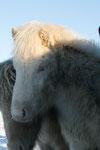 Foto von Monika Kimpfler, Fortuna auf Island Winter 2010/2011