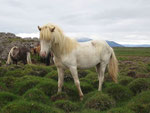 Foto von Monika Kimpfler, Fortuna auf Island 2011