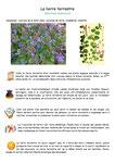 Herbes de la Saint Jean Plantes sauvages, comestibles et médicinales