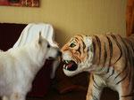 mein Freund der Tiger