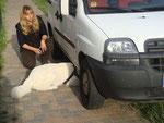 Suche unter einem Auto