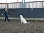 Obedience Beginner 2011