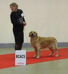 Potter , 1er exc Classe Travail ,RCACS RCACIB