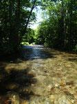 勝手に世界自然遺産に指定している流れ。こんな川で一日フライフィッシングできるなんて!