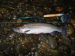 初夏、プライベートにて。とんでもなく強かった、思い出ぶかい1尾。この1尾によって、私にとって心に残る釣りというのがなんであるかを確信したような。
