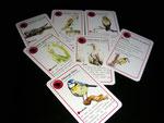 jeu de carte - famille oiseaux
