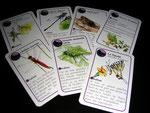 jeu de carte - famille insectes